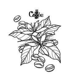 Gaphic coffee vignette vector