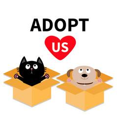 adopt us dont buy dog cat inside opened cardboard vector image