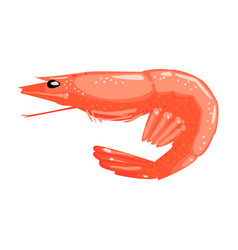 Boiled shrimp food item rich in proteins vector
