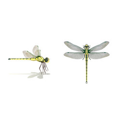 dragonfly on white background vector image