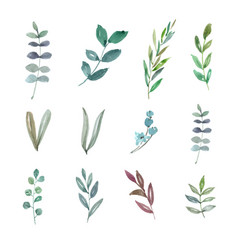 Set watercolor foliage hand-drawn elements vector