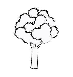 tree foliage wood branch botancial sketch vector image