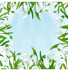 Floral background with white snowdrops eps10 vector image vector image