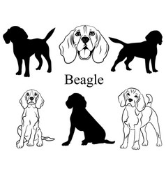Beagle set collection pedigree dogs black vector