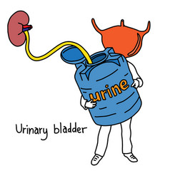 Metaphor function of urinary bladder vector