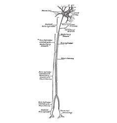 Neuron vintage vector