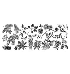 Set hand drawn blossoming trees spring d vector