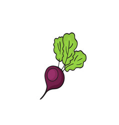 vegetables of red beetroot isolated vector image