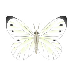white butterfly isolated o vector image