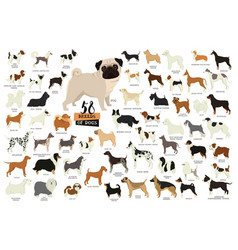 58 breeds of dogs isolated objects vector
