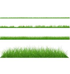Green grass dense big and small vector