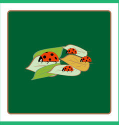 ladybird isolated on leaf vector image