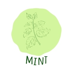 Mint branch vector image