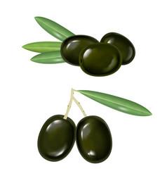 black realistic olives vector image