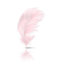 3d realistic falling pink flamingo fluffy vector image