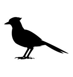 Bird natural feather fauna animal vector