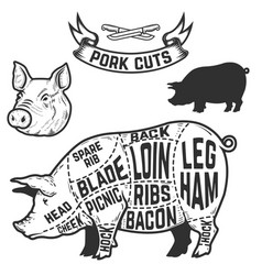 Pork cuts butcher diagram design element for vector