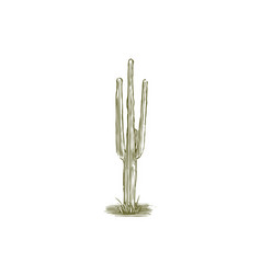 Woodcut cactus vector