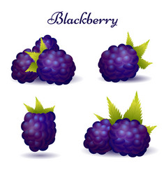 Forest blackberry icons with leaves vector