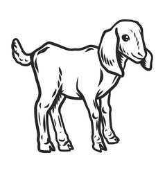 Lamb icon hand drawn style vector