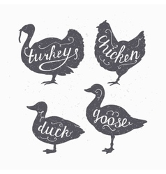 Set of hand drawn hipster style farm birds vector