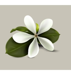 Spa flower vector