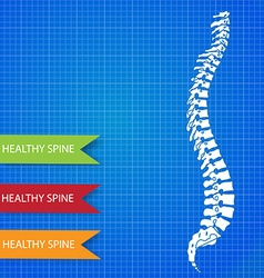 Spinal diagram vector