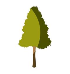 tree plant pine natural foliage image vector image