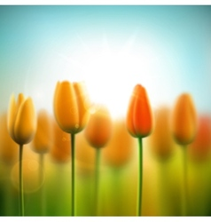 Spring background with tulips vector image vector image