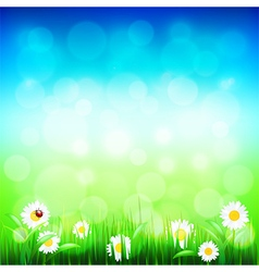 Green grass and blue sky with flowers vector image