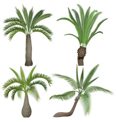 exotic tropical realistic palm palms tree vector image