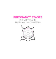 Pregnancy stages in 9 month vector