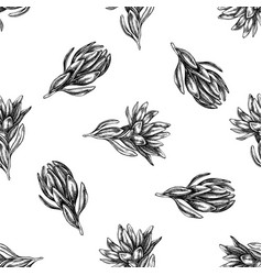 seamless pattern with black and white leucadendron vector image