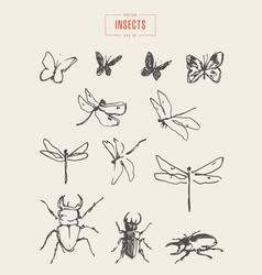 Set dragonflies butterflies drawn sketch vector