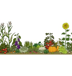 vegetable garden bed vector image