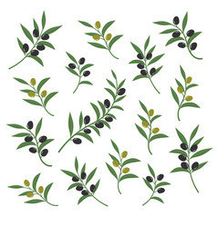 Olive branch set italian vector