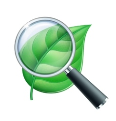 Magnifying glass and leaf vector image