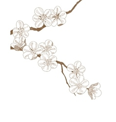 Hand drawn branch of plums blossom isolated vector