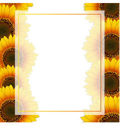 orange yellow sunflower banner card border vector image