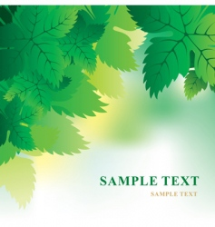 soft background with grape leaves vector image vector image