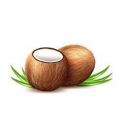 realistic coconut exotic leaves fruit 3d vector image