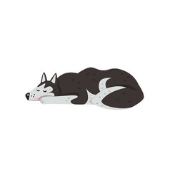 Siberian husky dog character sleeping vector
