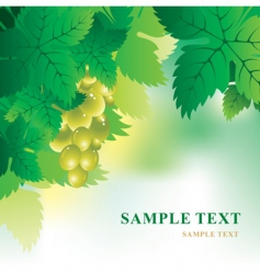 soft background with grape vector image vector image