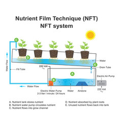 Nutrient film technique is a hydroponic technique vector