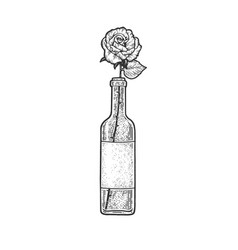 rose in bottle wine sketch vector image