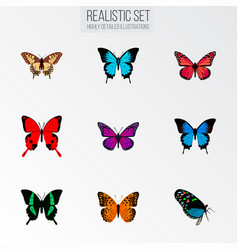 Set of moth realistic symbols with pink-wing sky vector