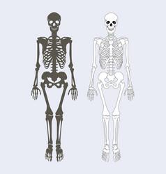 skeleton human body set vector image