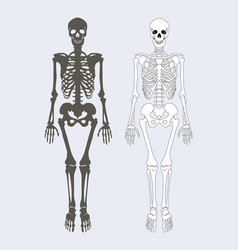 Skeleton of human body set vector