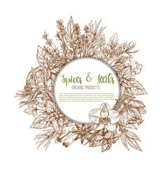 Spices herbs and leaf vegetable seasoning poster vector