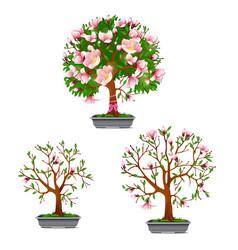 Stage growth blooming bonsai azalea vector